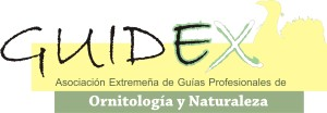 Logo-Guidex
